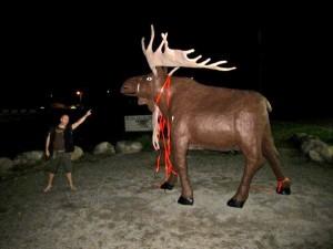 margyle_moose_newfoundland