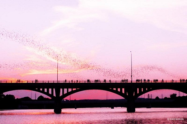 Congress Avenue Bridge, Austin, USA by Eric